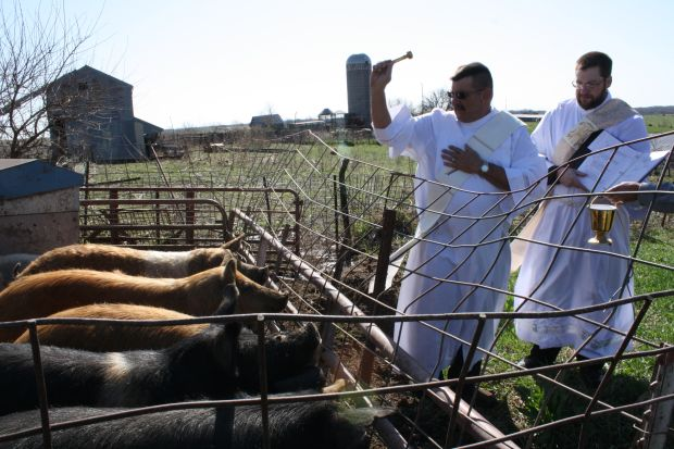 Deacon Eric Bertrand of Warren County, Iowa, and Deacon Tom Hunkele of Des Moines bless hogs April 10. The Iowa deacons are reviving the ancient Catholic tradition of Ember days. (CNS photo/Kelly Mescher Collins, Diocese of Des Moines) See EMBER DAYS May 1, 2015.